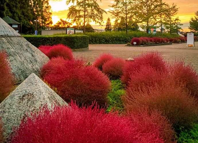 Kazo Hanasaki Park in Autumn