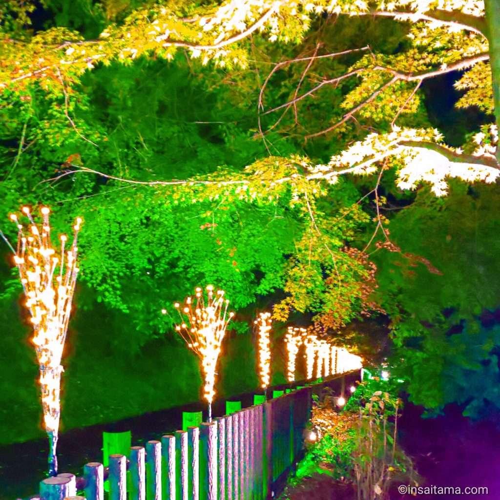 Autumn leaves and sakura lit up at night at Jomine Park