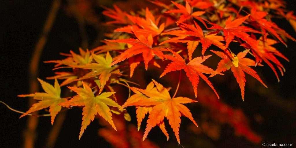autumn shinrin park