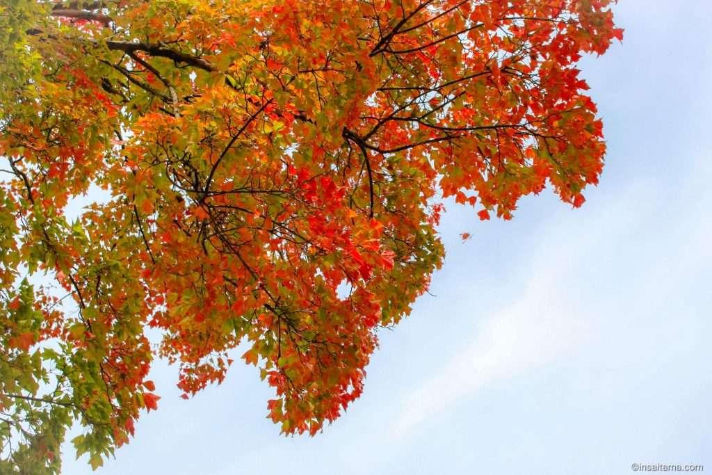 autumn leaves at shimokubo dam