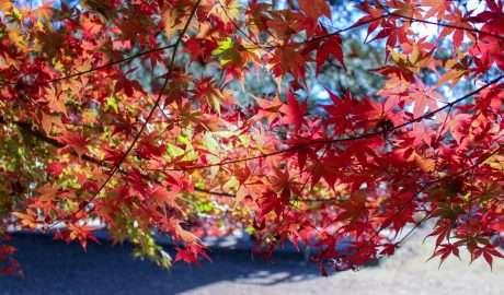 Autumn leaves Ranzan Valley