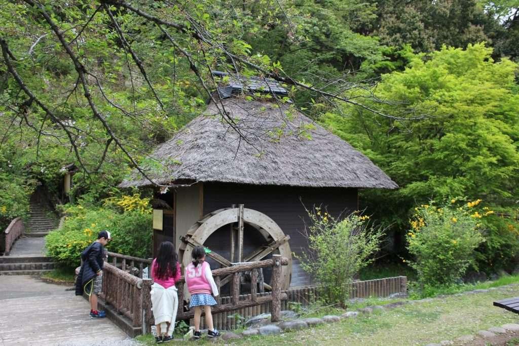 yamabuki no sato mill with cherry blossom