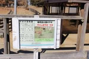 goats in gongendo park