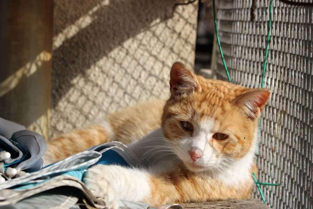 Instafamous cat at Enomoto farm