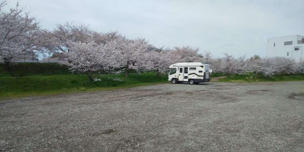 secret sakura spot in sakado saitama