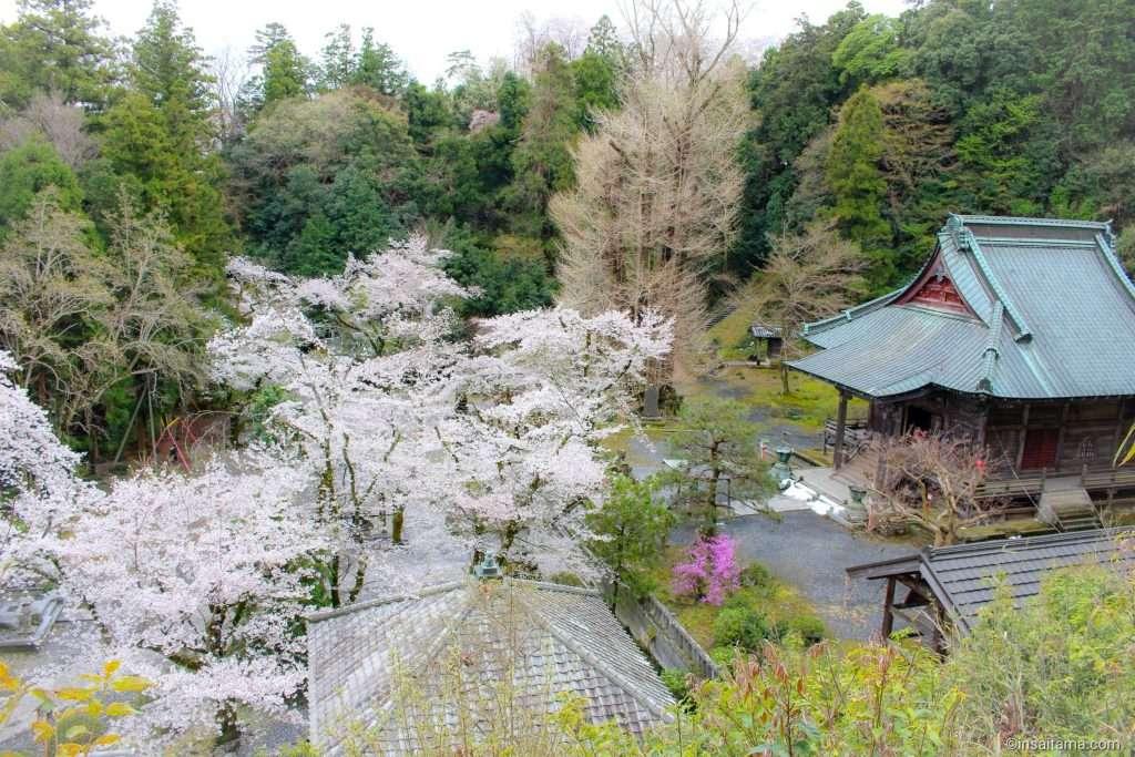 Iwadono in spring