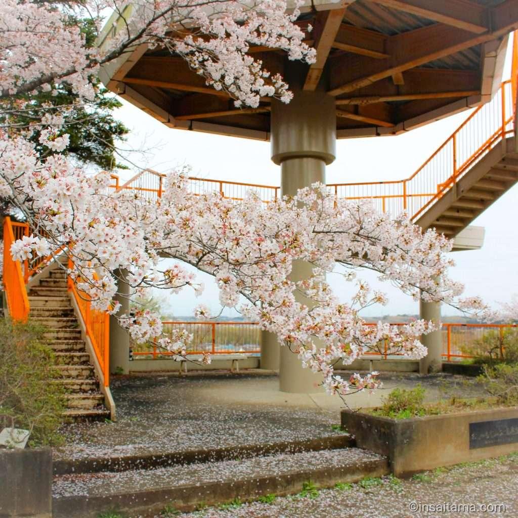 oshamojiyama park