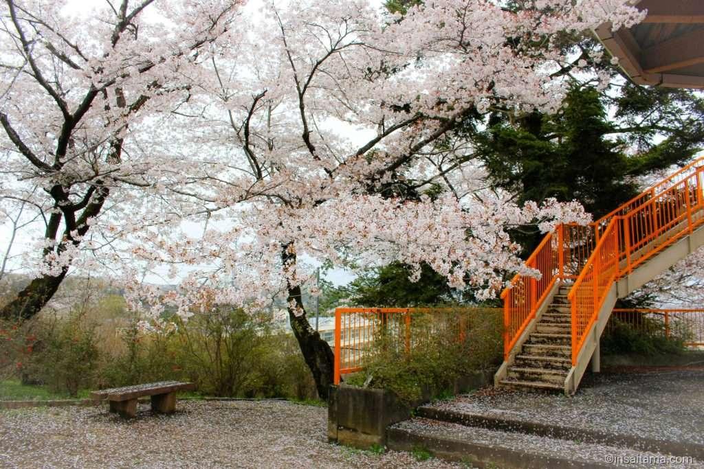 oshamoji yama park hatoyama saitama