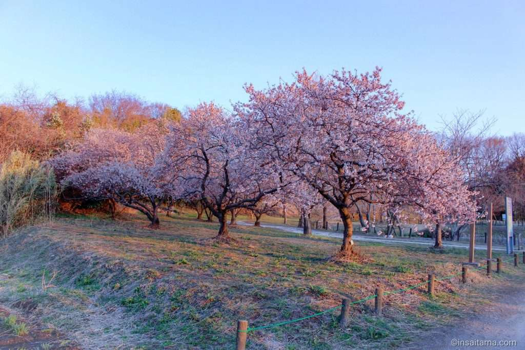takao sakura park