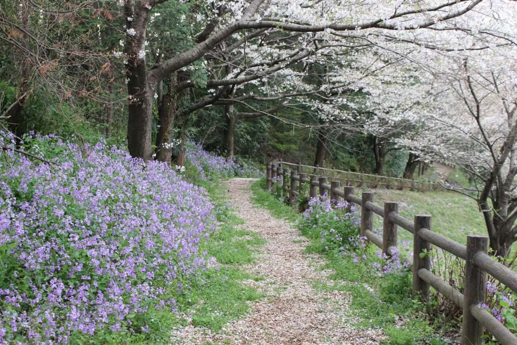 pathway to Mizube from Kitamoto Camp Field