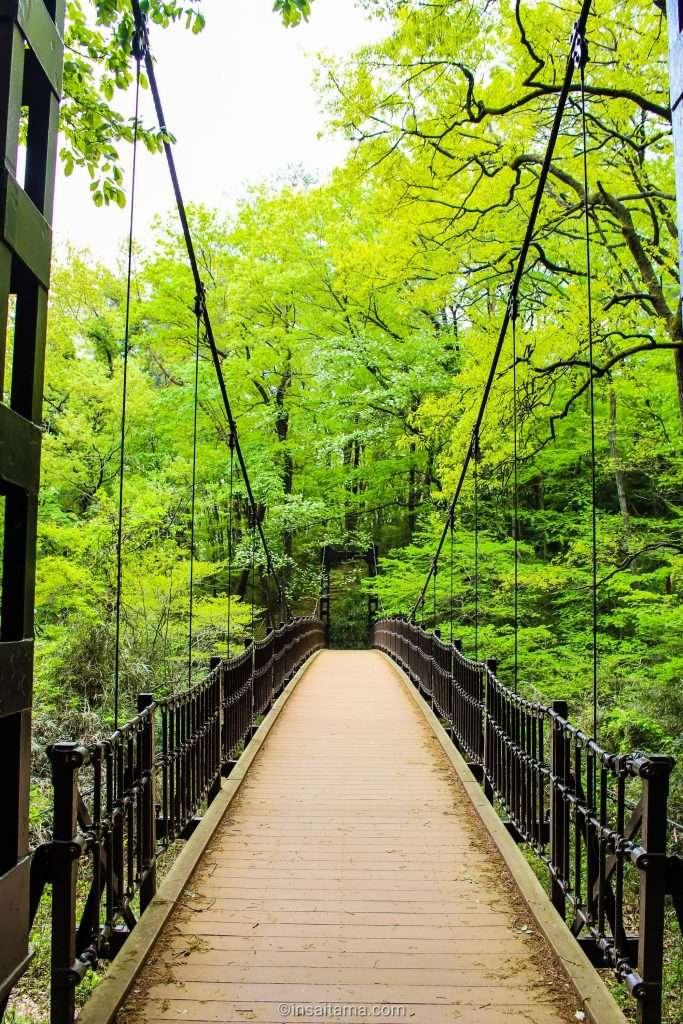 Suspension Bridge Shinrin Park