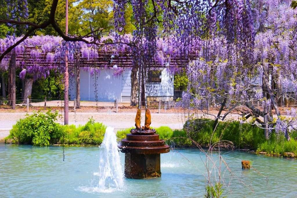 secret wisteria spot saitama