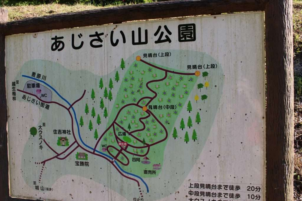 Ogose hydrangea