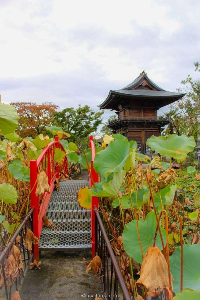 Zenchoji temple lotus garden kawagoe