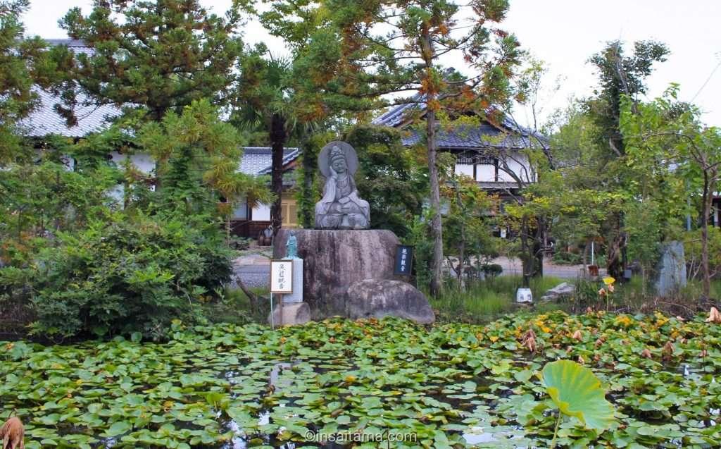 ancient lotus in kawagoe