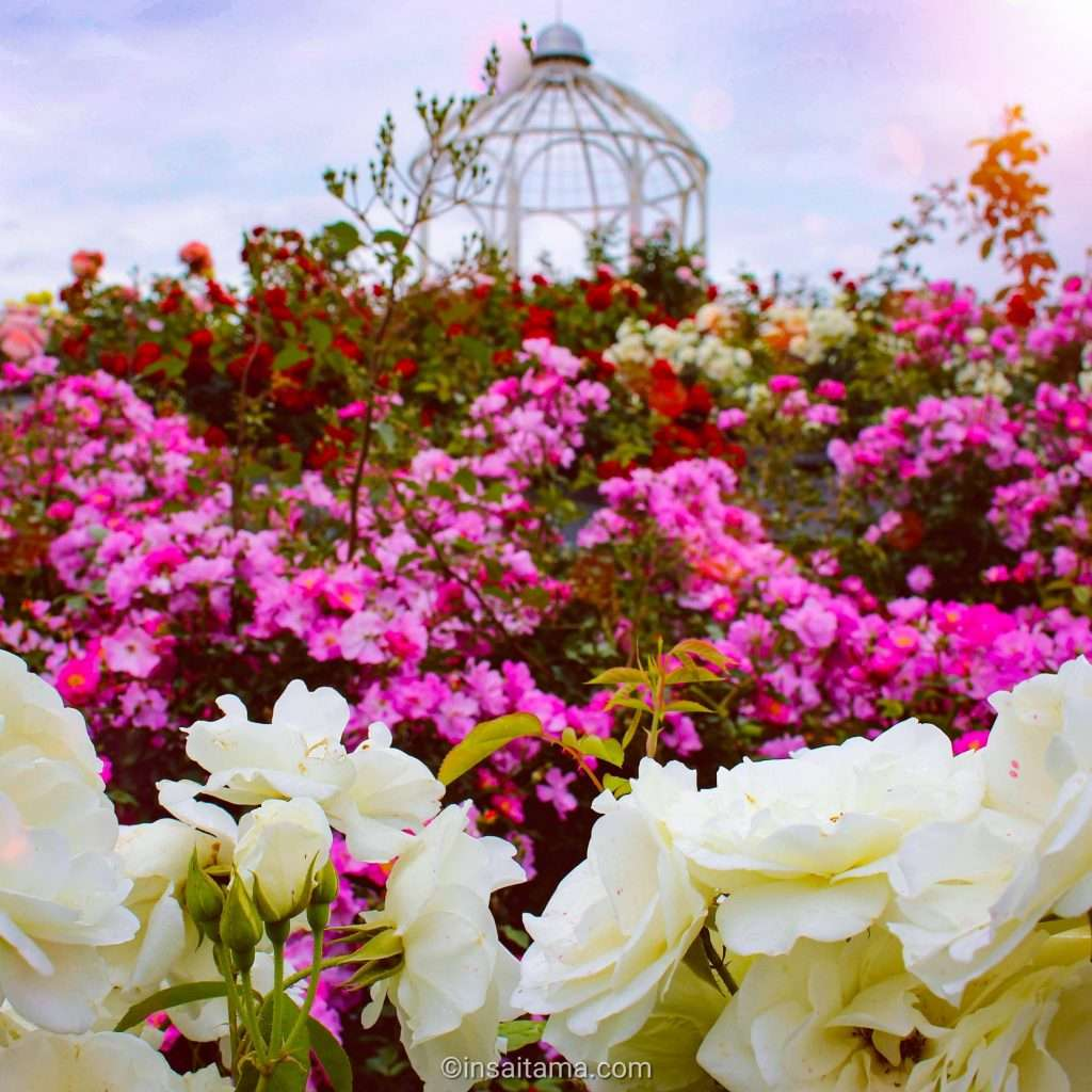 Roses and Gazebo Ageo
