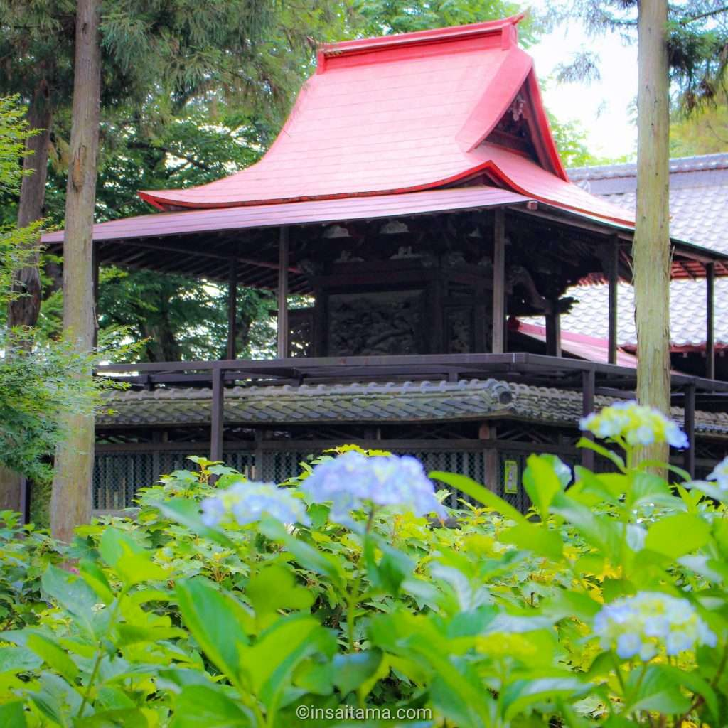 Sashiogi shrine Saitama City and hydrangea