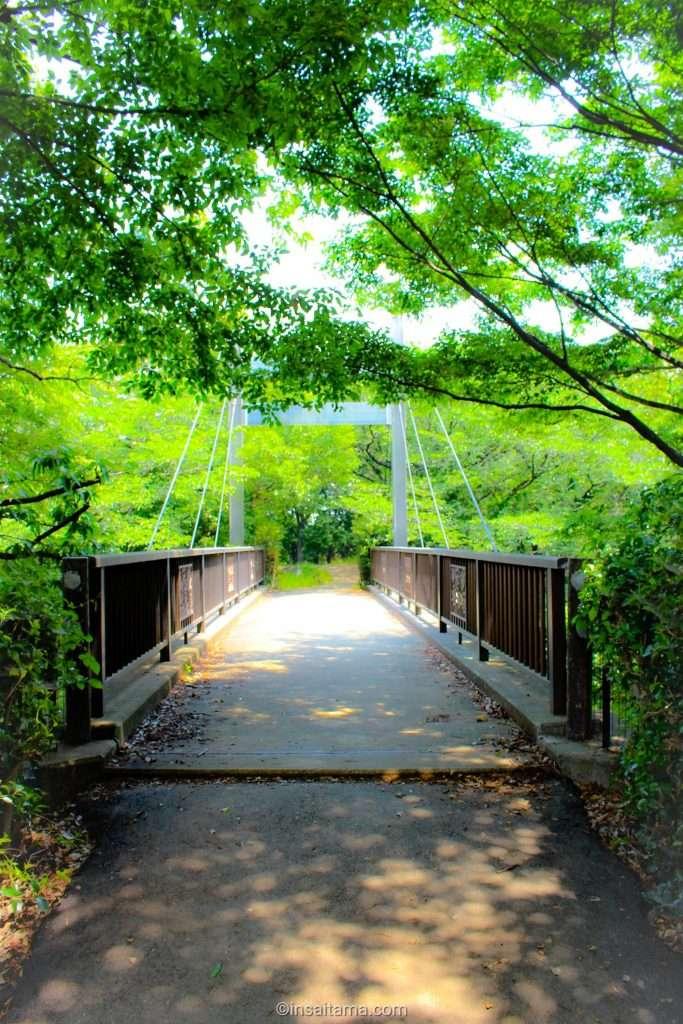 Walkway from lavender hill at Shirasagi Park in Kuki city