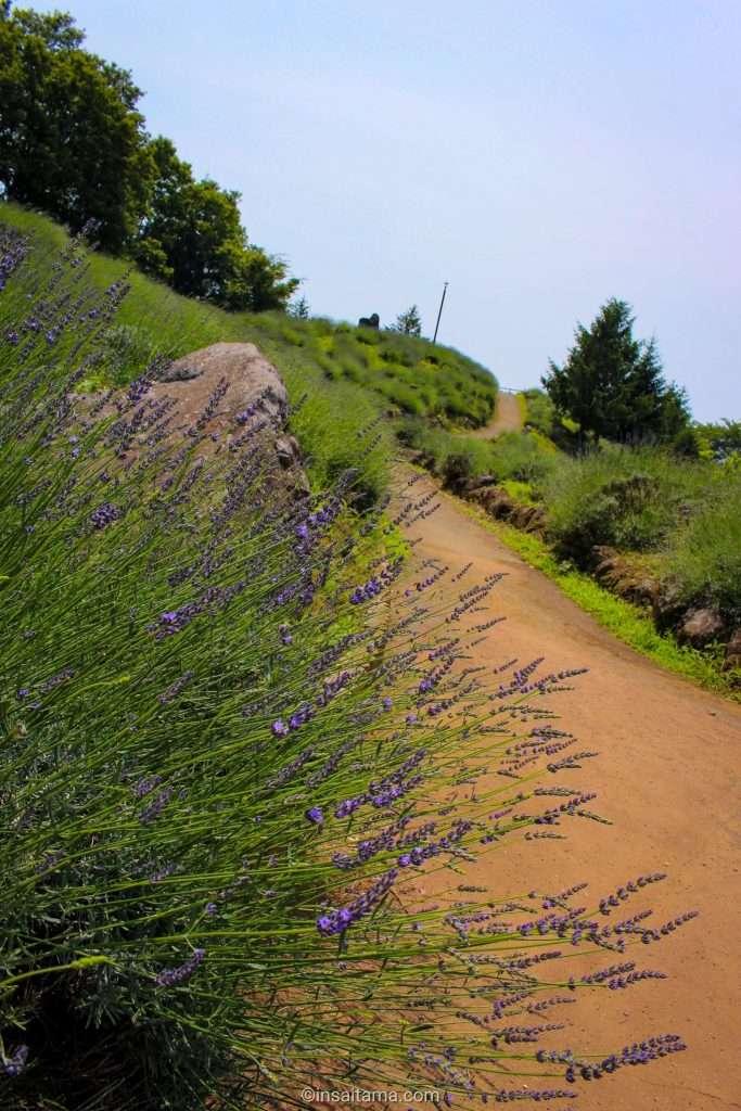 Lavender hill shirasagi park kuki
