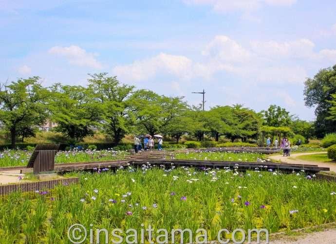 seseragi iris garden in Yamazaki park fujimi city Saitama
