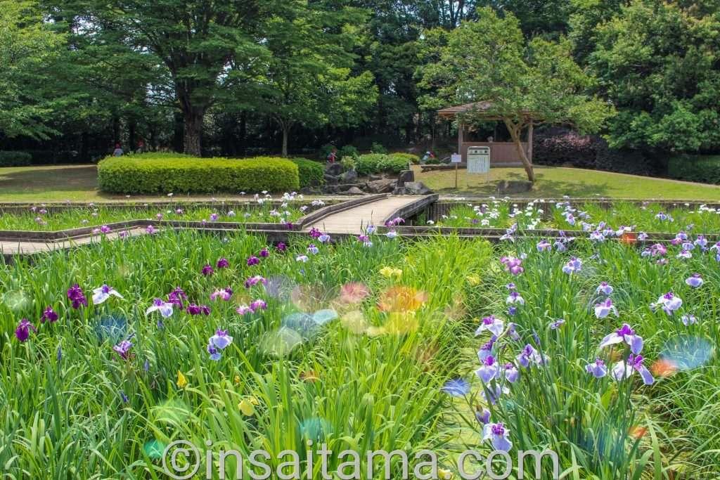 seseragi iris garden yamazaki park fujimi city