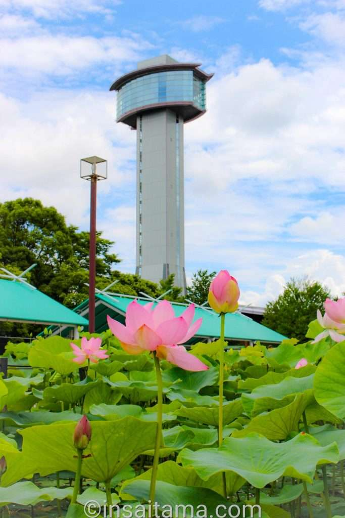 observation tower in Kodai Hasu no Sato in Gyoda City Saitama Prefecture