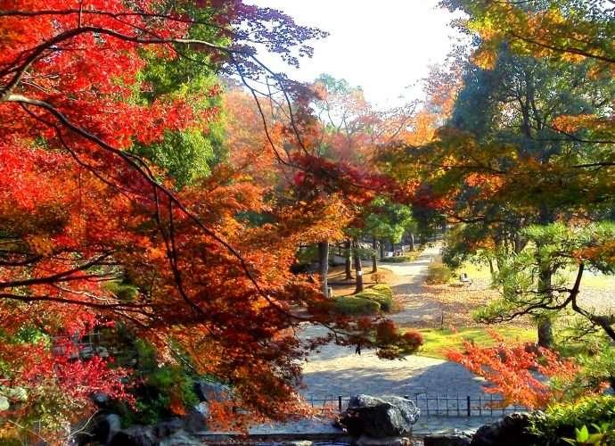 autumn leaves maruyama park ageo