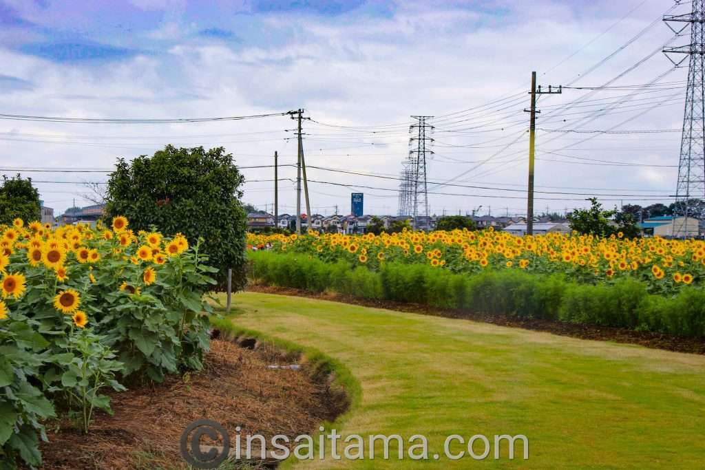 Hana no Oasis flower garden Konosu City Saitama Prefecture